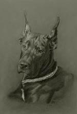 deutsche-dogge-portraitdeutsche-dogge-portrait.png