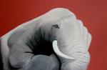 elefant-auf-handelefanthand.png