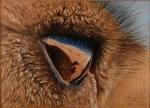farbzeichnung-tuareg.jpg