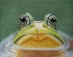 frosch-1.jpg