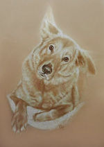 golden-retriever-portraitgolden-retriever-portrait.png