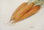 karottenkarotten.png