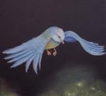 kleiner-vogelkleiner-vogel.png