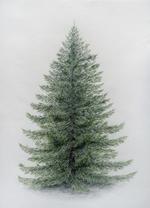 nadelbaum-coloriertnadelbaum-coloriert.png