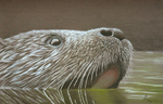 otterotter.png