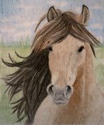 pferd-xb.png