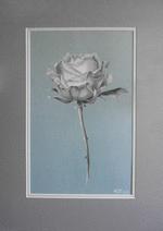rose-auf-blaurose-blau.png