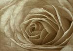 rose-sepia.png