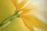 tulpen-streiflichttulpen-streiflicht.png