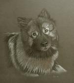 wolfspitzwolfspitz.png