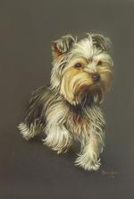 yorkshire-terrier-portraityorkshire-terrier.png