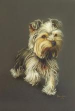 yorkshire-terrier-portraityorkshire-terrier.png